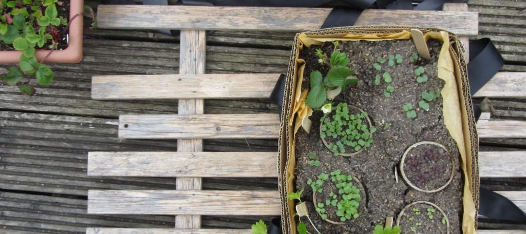 seedlings_banner