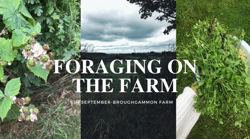 foraging-northern-ireland-ballycastle
